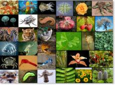 Книги о других животных, растениях, птицах