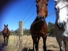 Книги о лошадях